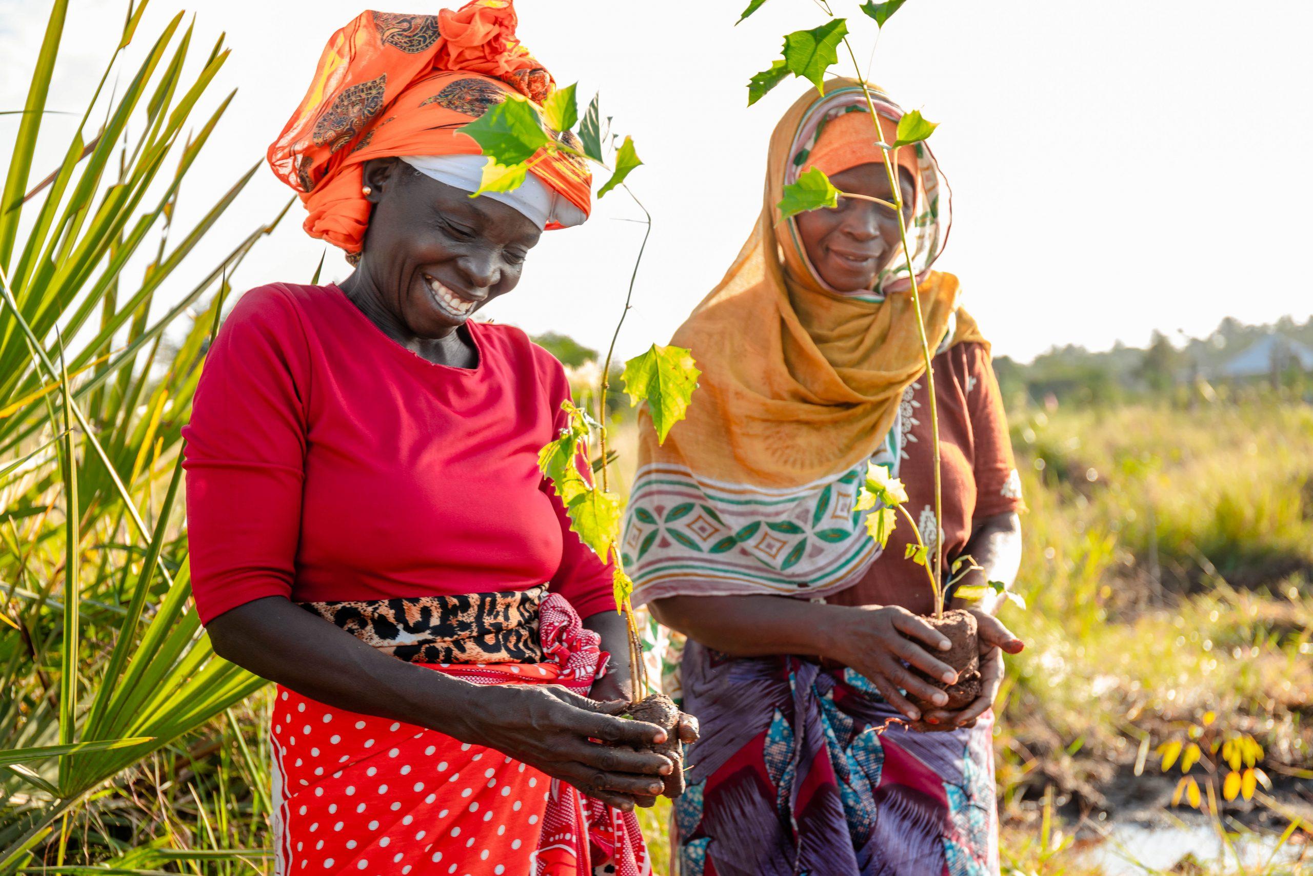 Local women planting trees, Tanzania