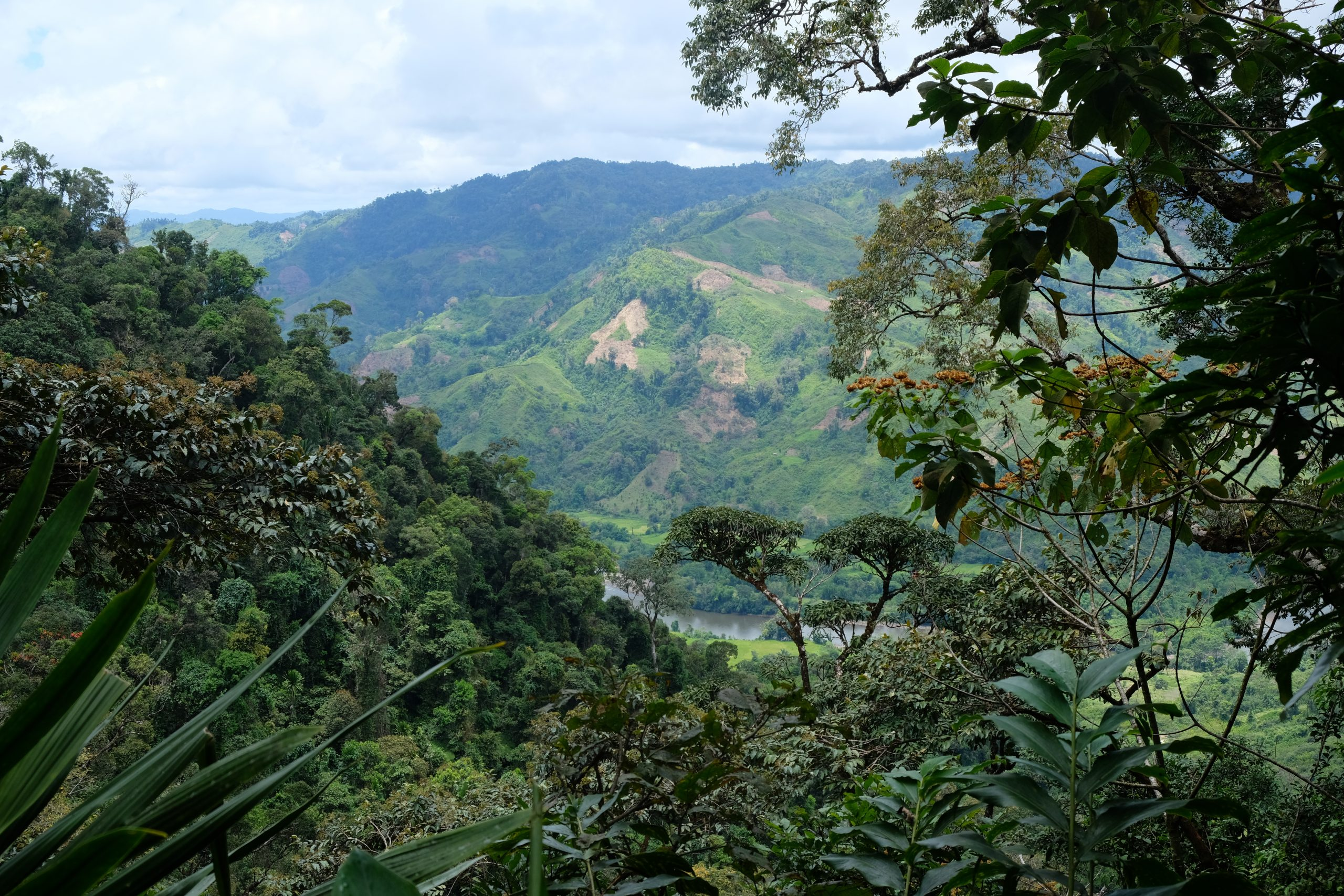 View of forested mountains, Madagascar
